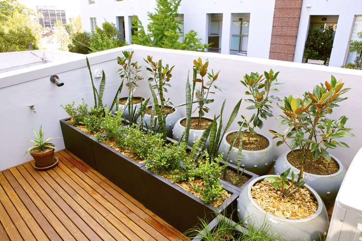 Everything you need know ultimate urban gardener phillyvoice urban gardener solutioingenieria Images