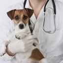 Sick Dog Istock