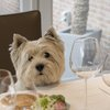 Dog with wine glasses at table