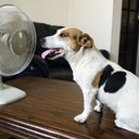 A dog and his fan