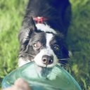 08242015_DogFrisbee