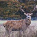 041216_deer