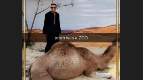 North Philly prom camel