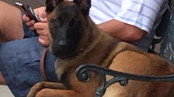 lost dog Rylee