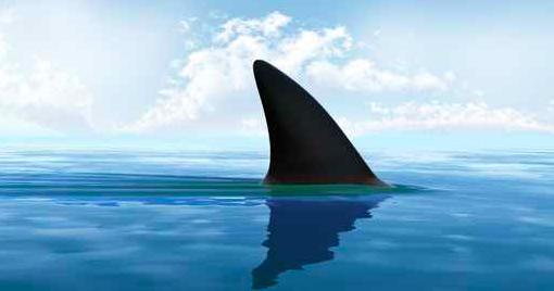 New Smyrna Beach Fl Shark Swarm