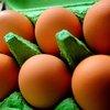 eggs usat