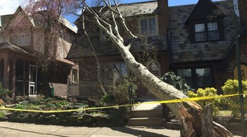East Falls downed tree