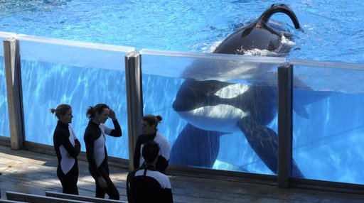 Obit SeaWorld Orca