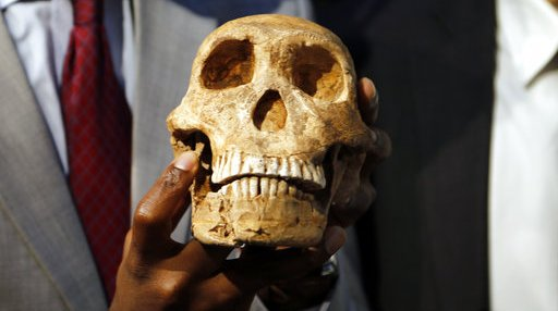 South Africa Human Ancestor