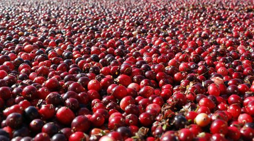 Cranberries Urinary Infections
