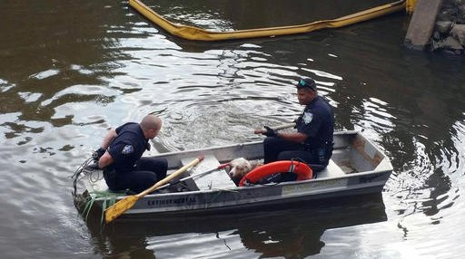 FW: Port Authority Police Dog Rescue at Newark Airport