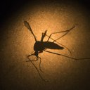 Zika Male Fertility