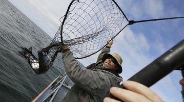 California Drought Struggling Salmon