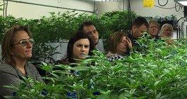Marijuana Agriculture