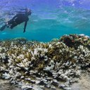 Fiji Global Coral Die-Off