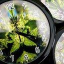 AP Explains Marijuana 4/20 Holiday
