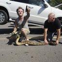 ODD Snake Under Car