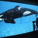 SeaWorld_Whales