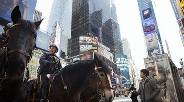 NEW-YORK-POLICE-HORSES