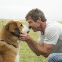 Film-A Dog's Purpose