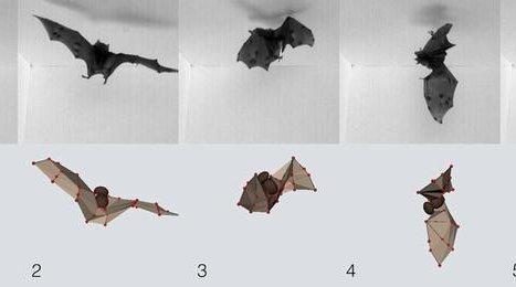 SCIENCE-BATS