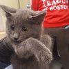 ODD Kitten Rescue-Highway