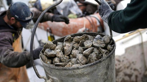 Oyster Outbreaks