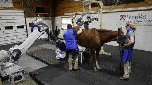 Veterinary Robotics