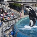 USA-SEAWORLD