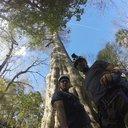 FLORIDA-TREE