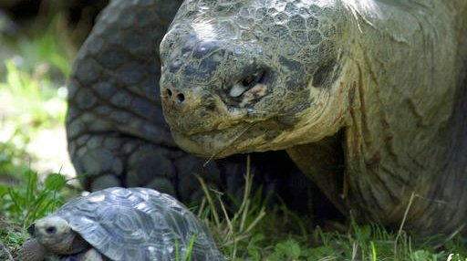 Galapagos tortoise oldest