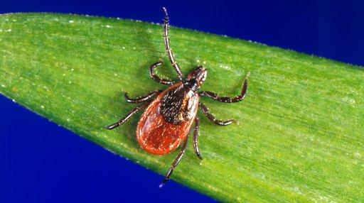 Diagnosing Lyme