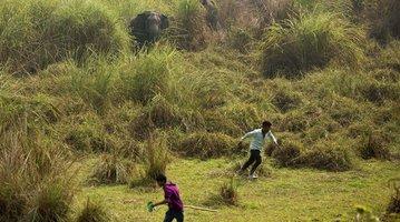 India Wildlife Conflict