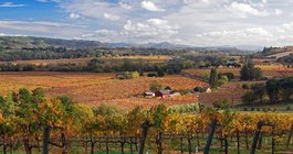 Napa vineyard in the fall