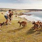 Limited - Stokes Bay Kangaroo Island