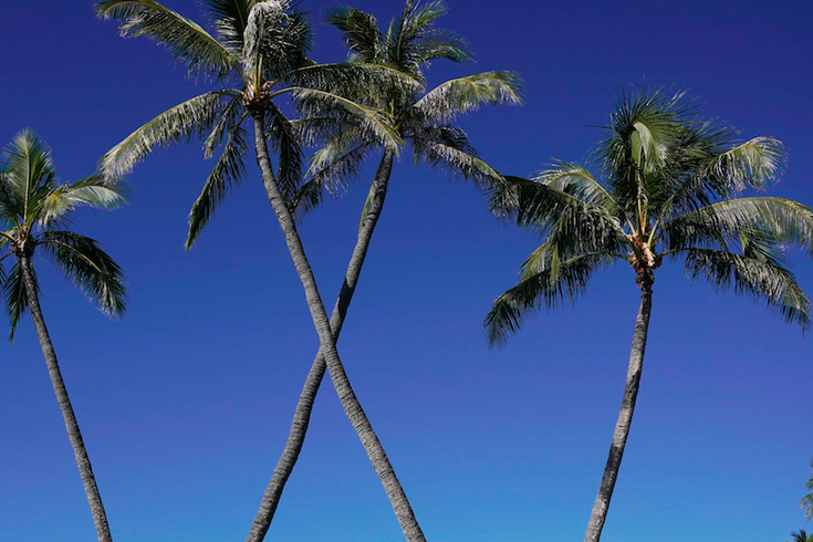 palm trees in Hawaii