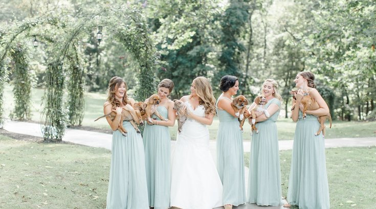 Wedding Puppies